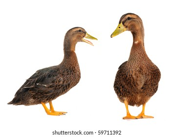 two duck on a white background
