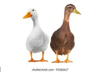 two duck white on white a background