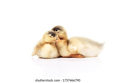 Two ducklings on a white background