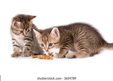two eating kittens