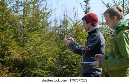 Two eco activists take pictures of fir trees in the forest and make notes on the paper. Conservationists protecting forest. Bright sunny spring day.