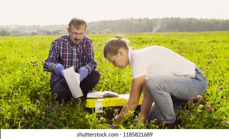 Two ecologist examining plants on the meadow. They getting sampels of plants. Field work
