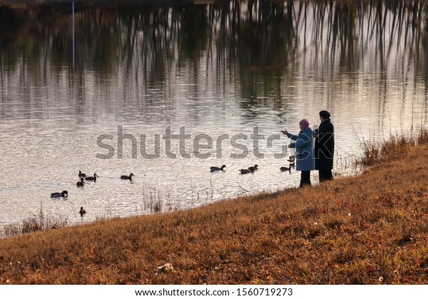 Two elderly women feed mallard ducks from the banks of the Yenisei River on a cool autumn evening. Russia, Krasnoyarsk, October 30, 2019