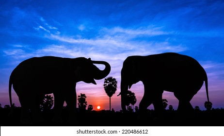 Two elephant on twilight time in Thailand Asia