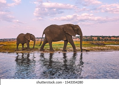 Two elephants, an adult female and her baby, walk along the river bank.