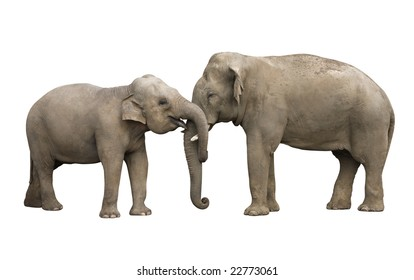 Two elephants, mother and her young calf, isolated with a clipping path using pen tool. Very easy to put over any background you like.