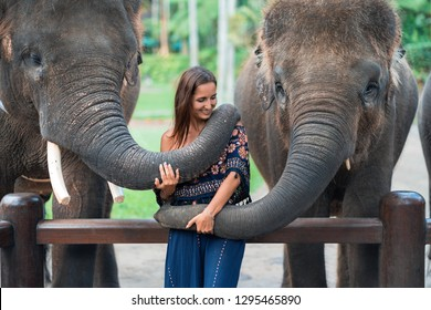 two elephants playing with a young girl .hugging the trunk.