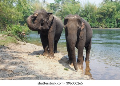 Two elephants stand near the river