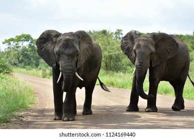 two elephants teenagers,South Africa