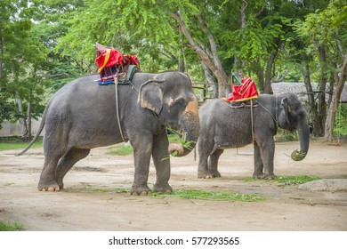 Two elephants waiting for tourists at one of the parks of Thailand..