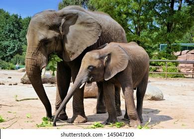 zwei Elefanten im Zoo
