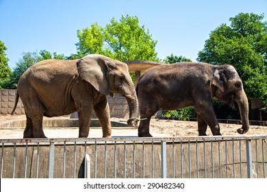 Two elephants in zoo, Germany