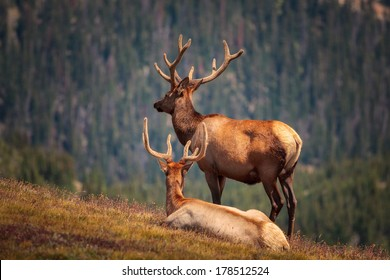 Two elks looking away into the distance, rocky mountains