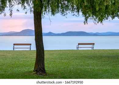 Two empty benches under the tree on the lakeshore with Badacsony mountain in the background. Lake Balaton at pastel sunset.