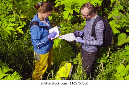 Two environmental scientists in thickets of cow-bream. A man checking with the GPS navigator.