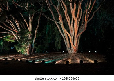 two evergreen trees lit by floodlights at night in park