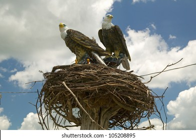 Two fake eagles and a nest on the roadside in rural Virginia