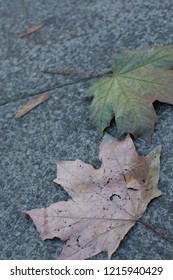 Two fallen leaves on the concrete pavement. In autumn, one leaf shows signs of decay and is already brown while the other contrasts in bright green with tinges of red showing future decay