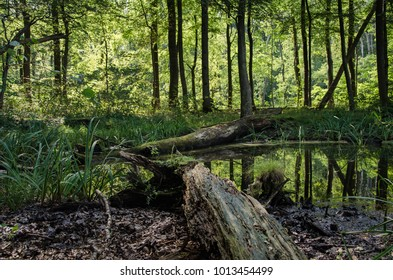 Two fallen wooden logs, one close and one further away, have found rest in a small pond. Reflections of trees can be seen in the water and foliage is growing around.