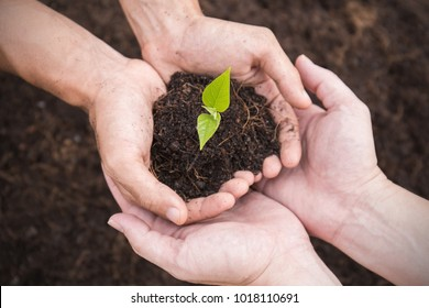 Two farmer hands holding and caring a young green plant, closeup hands environment heal earth day and save the world concept background