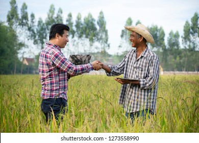 Two farmer holding hands in rice fields Holding laptops and notebooks in hand.