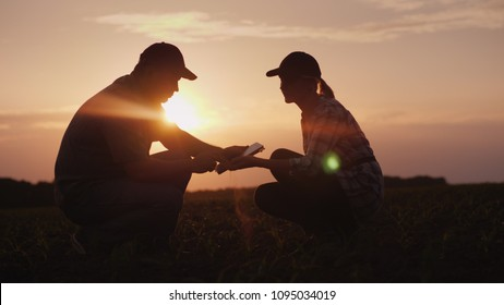 Two farmer man and woman are working in the field. They study plant shoots, use a tablet. At sunset