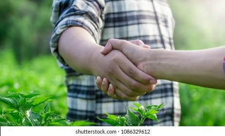 Two farmer shaking hands on Chilli farm.