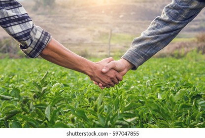 Two farmer shaking hands on potato leaves When sunset.