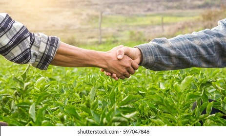 Two farmer standing and shaking hands on potato leaves.