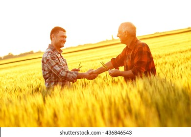 Two farmer standing in a wheat field and shake hands on sunset.