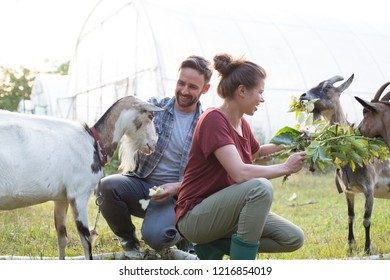 Two farmers, husband and wife tending to their goats on their farm