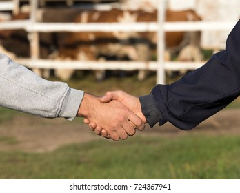 Two farmers shaking hands in front of cow ranch. Agribusiness concept