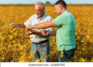 Two farmers standing in a field examining soybean crop before harvesting.