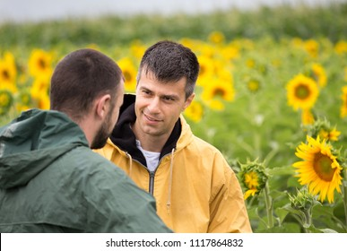 Two farmers with tablet standing in sunflower field and talking