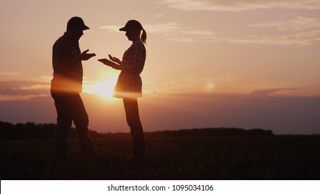 Two farmers work in the field in the evening at sunset. A man and a woman discuss something, use a tablet