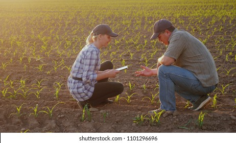 Two farmers work in the field in the evening before sunset. Inspect the green shoots on the field, use a tablet