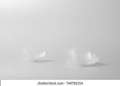 Two feathers on a white background