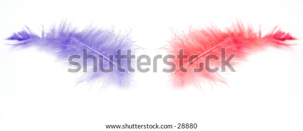 Two feathers that came from a regular duster. One purple/blue, one red.
