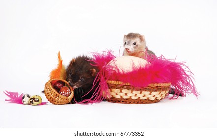 Two ferrets with a Easter eggs in a basket and rose feathers