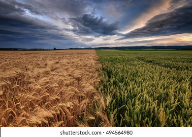 Two fields in agriculture with dramatic sky