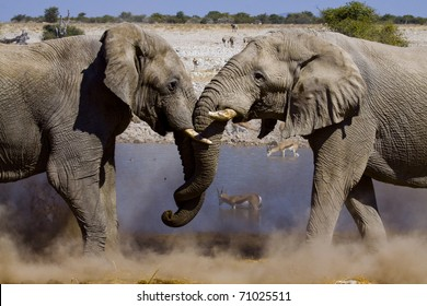 two fighting elephants at a water hole in the dusty desert of Etosha National Park, Namibia