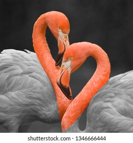 Two flamingoes making the shape of a heart. Colorized image
