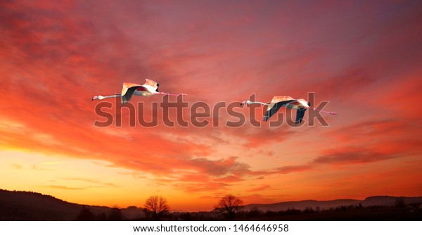 Two flamingos flying at sunset over a forest
