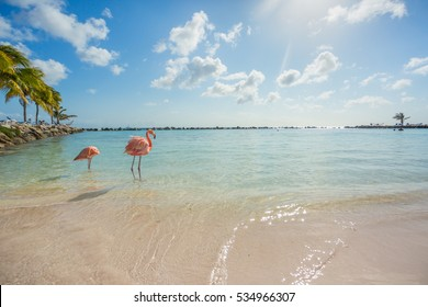 Two flamingos on the beach