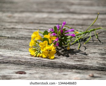 Two flowers in spring on an old wooden board