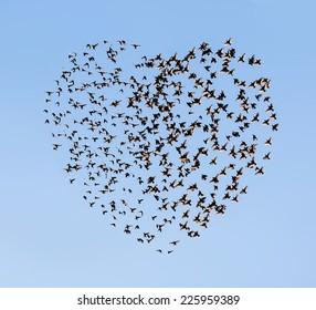 two flying flock birds (in shape of heart)
