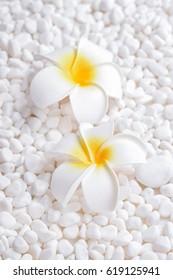 Two frangipani flower on pile of white stones background Zen spa background