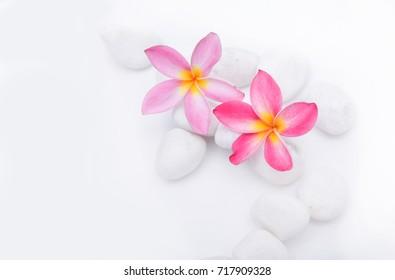 Two frangipani flower on pile of white stones background- Zen spa background