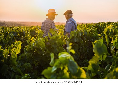 Two French winegrowers working in their vineyards at sunset.