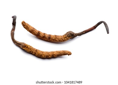 Two fresh cordyceps sinensis. Isolated on white background.